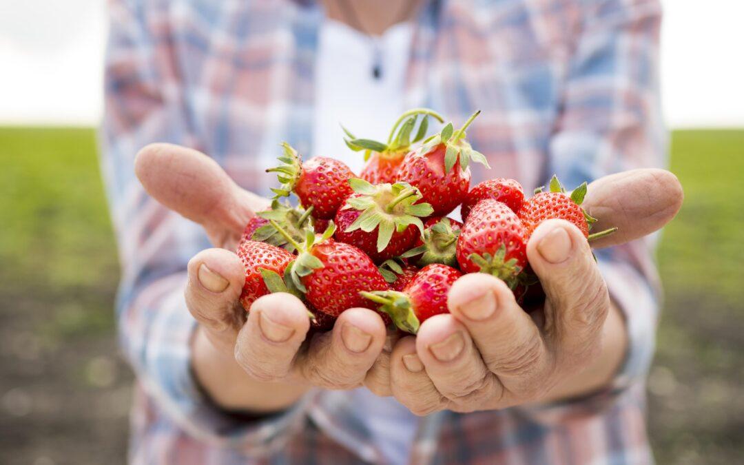 La clave del éxito de tu marketingEmpieza a pensar como agricultor y no como cazador